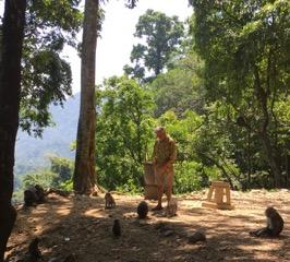Feeding Lombok Monkeys