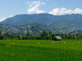 Lombok Rice Paddy