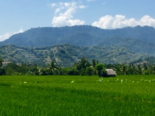 Lombok Rice Paddy