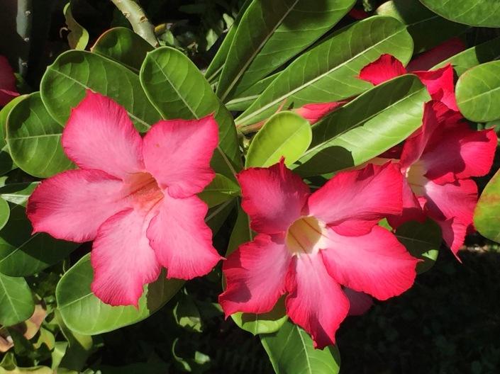 Lombok Flowers